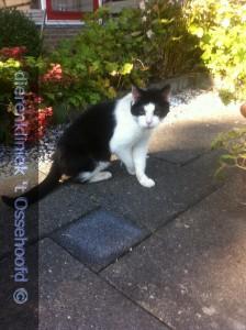 15Gewonden kat Wiersma