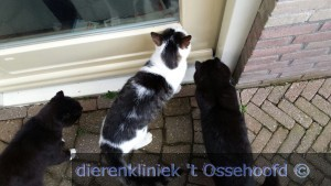 15Stam Tommy 07634 vermist mv